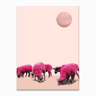 Pink Sheeps On Mars Canvas Print