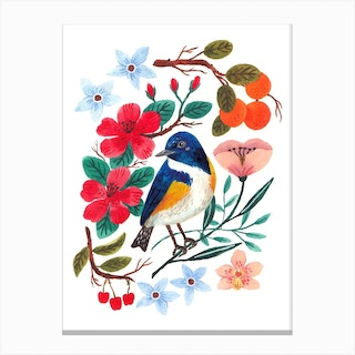 Red Flanked Bluetail Canvas Print