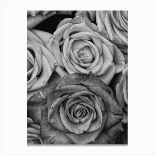 Vintage Style Roses Black And White Copy Canvas Print