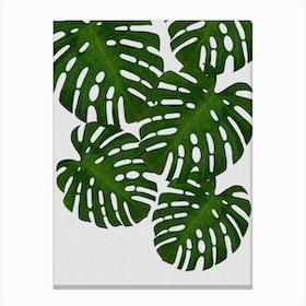 Monstera Leaf I Canvas Print