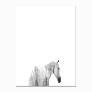 Horses Back Canvas Print