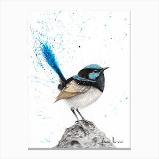 Mountain Blue Wren Canvas Print