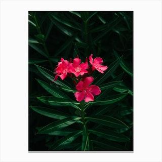 Florida Blooms Canvas Print