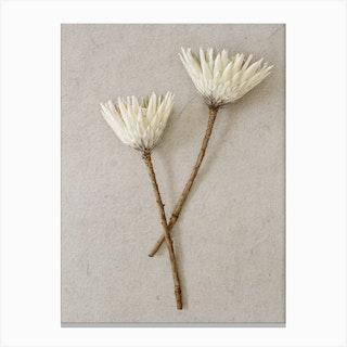 Minimal White King Proteas Canvas Print