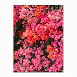 California Blooms Canvas Print