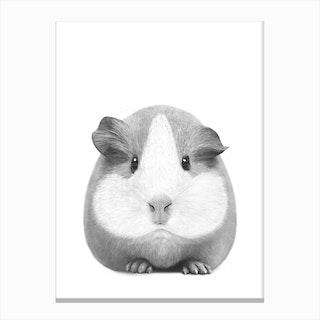 Guinea Pig Girl Canvas Print