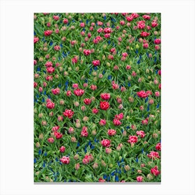 Field of Tulips 2 Canvas Print