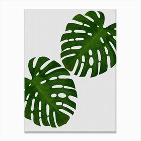 Monstera Leaf II Canvas Print