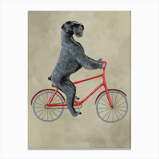 Schnauzer On Bicycle Canvas Print