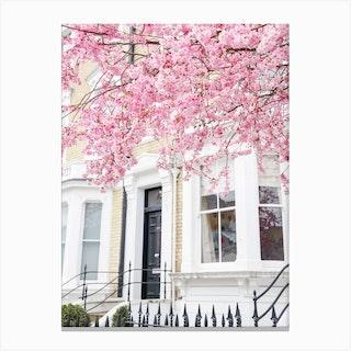 Pink Blossom Sky Canvas Print