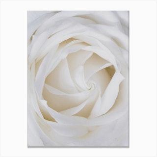 White Rose Close Up Canvas Print