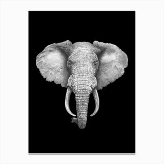 Elephant On Black Canvas Print