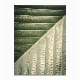 Palm Leaf Ii Canvas Print