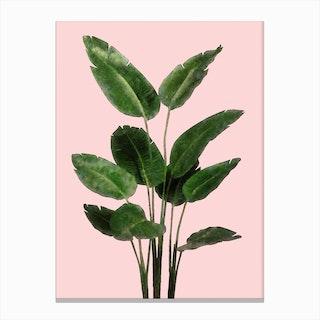 Bird of Paradise Plant on Pink Canvas Print