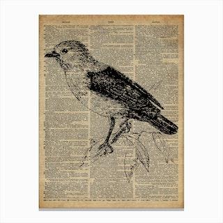 Babbler Bird Canvas Print