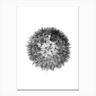 Grey Grafic Dandelion Canvas Print