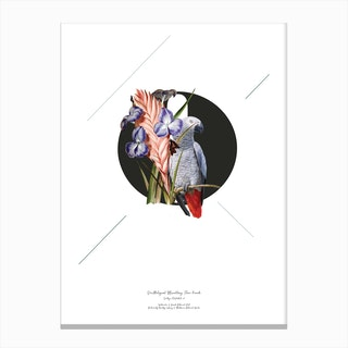 Botanical Alphabet O Canvas Print