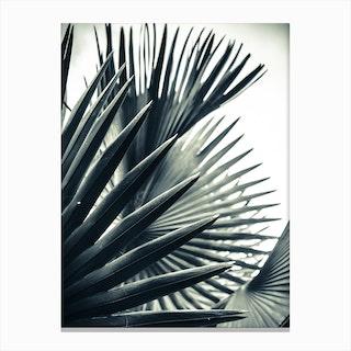 Palm Shade 2 Canvas Print