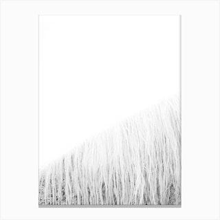White Horse I Canvas Print