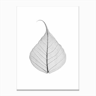 Skeleton Leaf Canvas Print