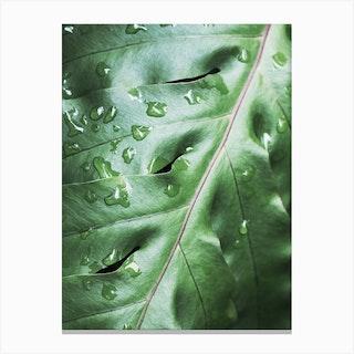 Waterdrops On Green Leaf Canvas Print