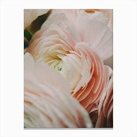 Ranunculus 2 Canvas Print