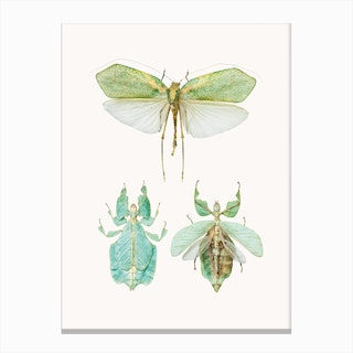 Insects VII Canvas Print