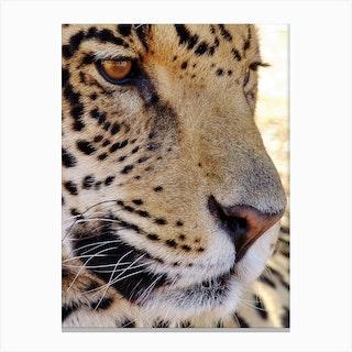 Jaguar Face Canvas Print
