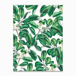 Botanica In Canvas Print
