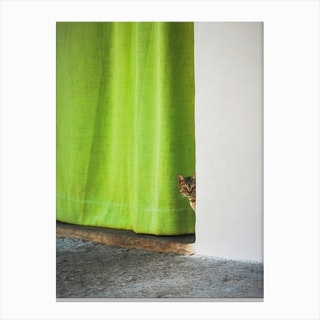 Cat And The Curtain Canvas Print