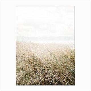 Dune Grass At The Beach Art Print Canvas Print