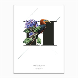 Botanical Alphabet H Canvas Print