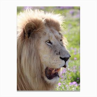 White Lion Male Canvas Print
