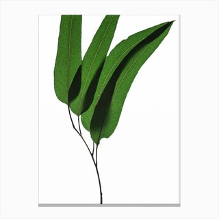 Green Leaf II Canvas Print