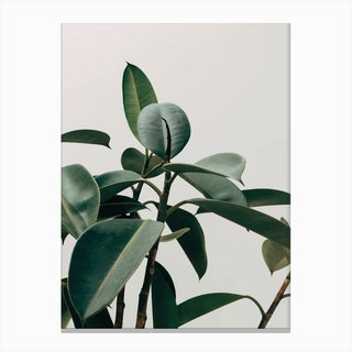 Green Leaves with Grey Background Canvas Print