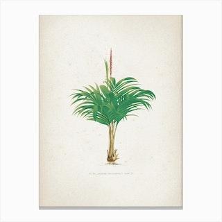 Vintage Kerchove 4 Les Palmiers 19 Canvas Print