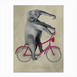 Elephant On Bicycle Canvas Print