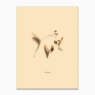Botanico VI Canvas Print