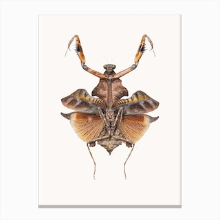 Insects VI Canvas Print