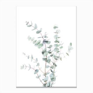 Botanical I Canvas Print