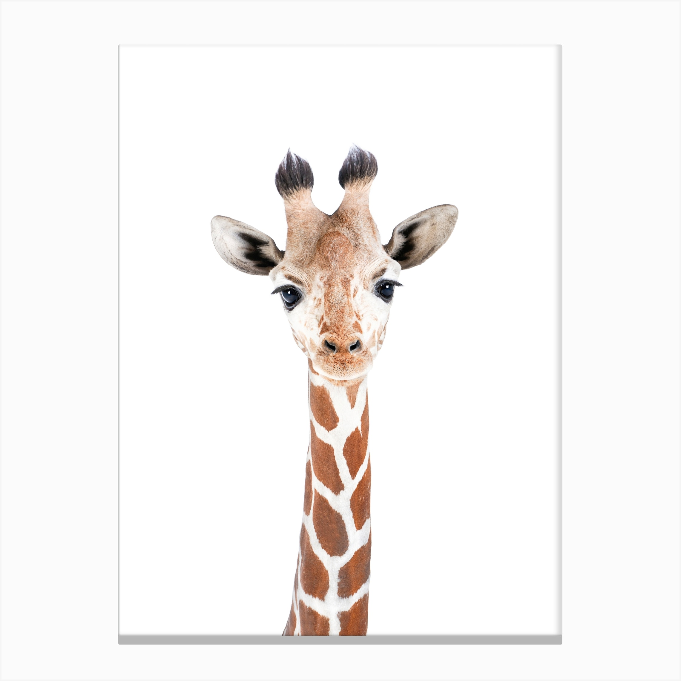 Giraffe Canvas Print By Sisi And Seb Fy