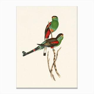 Tropical Parrots Couple Canvas Print