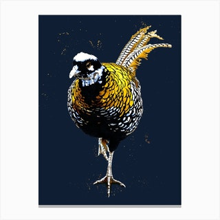 The Reeves Pheasant On Midnight Blue Canvas Print