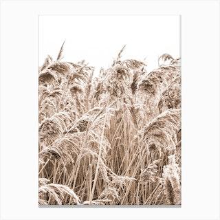 Golden Grass II Canvas Print