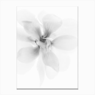 White Petals III Canvas Print