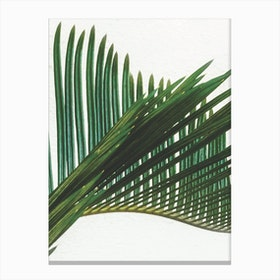Plant Range II Canvas Print