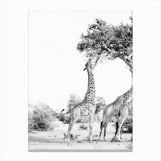 Kenya Trees Canvas Print