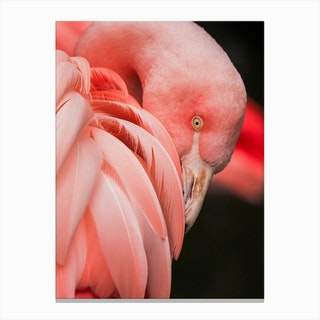 Pink Flamingo Close Up Photo Canvas Print