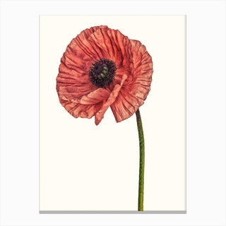 Poppy Pink 01 B Canvas Print