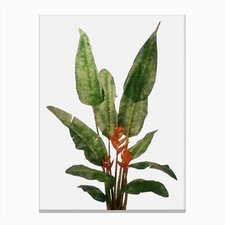 Bird of Paradise Plant on White Canvas Print